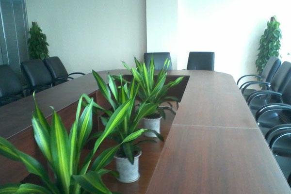 辦公室植物租賃擺放
