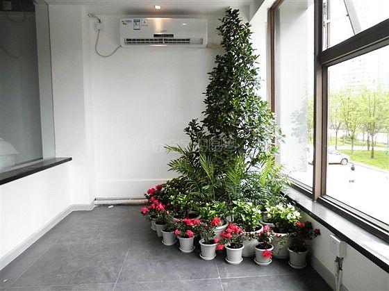 家庭植物租赁
