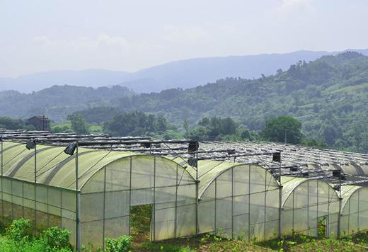 重庆园林绿化设计养护技术分享