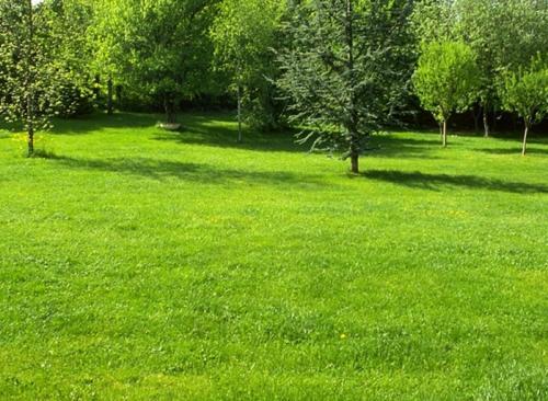 园林绿化养护时容易忽略哪些事项