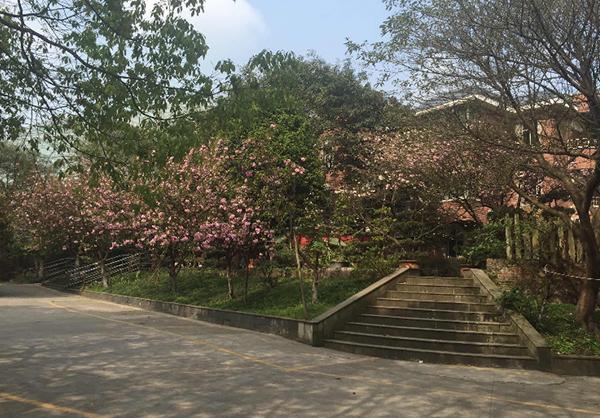 重庆松林养老院环境展示