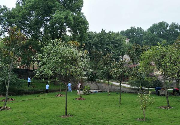长寿养老院绿化