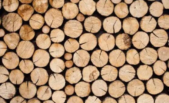 进口木材的注意事项