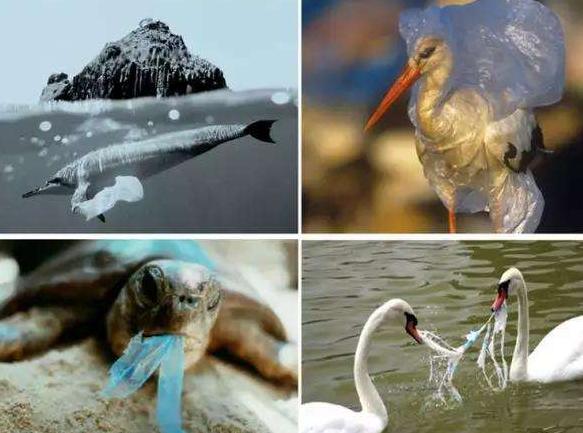 乱扔塑料袋对于动物的危害