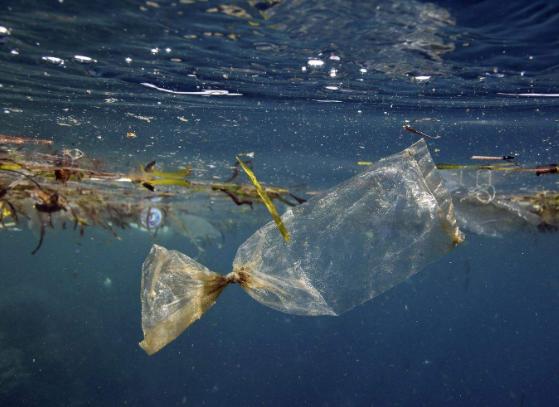废塑料袋被排入海洋会有什么危害