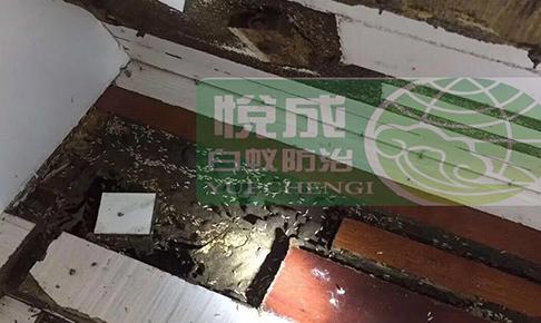 重庆家庭灭白蚁