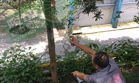园林树木白蚁防治