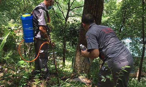重庆园林灭白蚁
