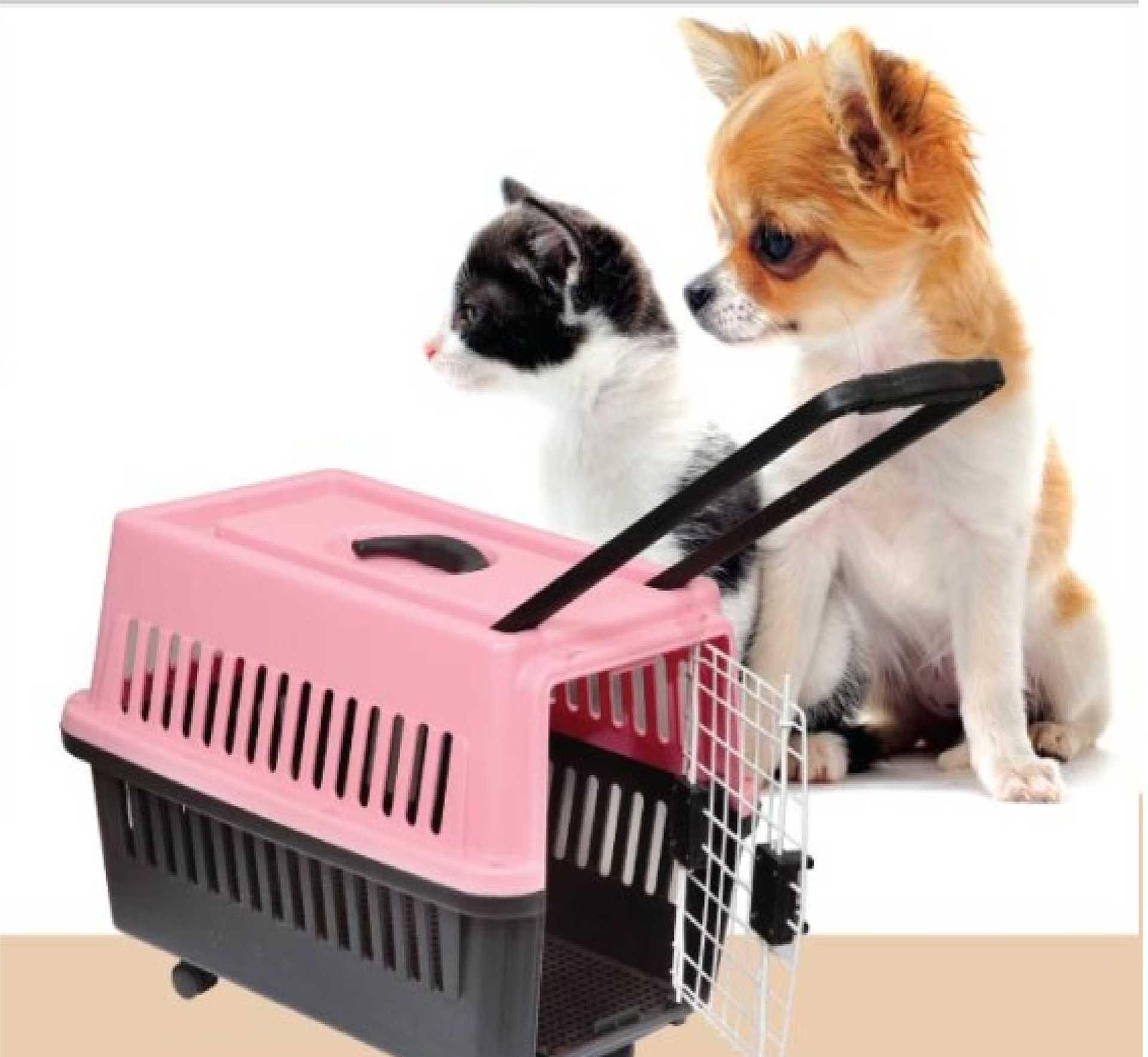 空运 宠物 保险_宠物空运流程_空运宠物大概多少钱