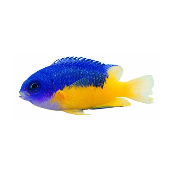 观赏鱼鱼苗