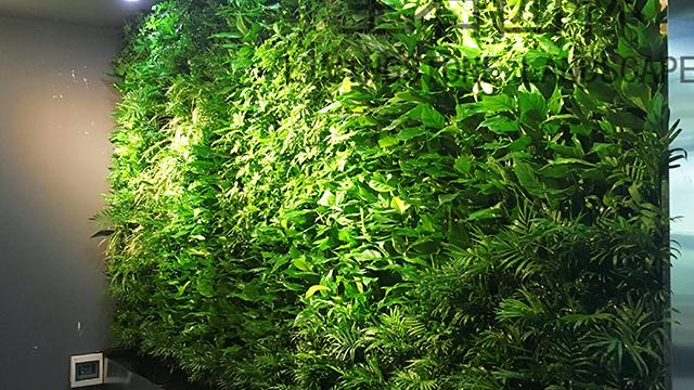 互联网产业园生态垂直绿化