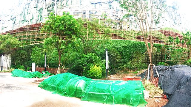 华侨城垂直绿化项目