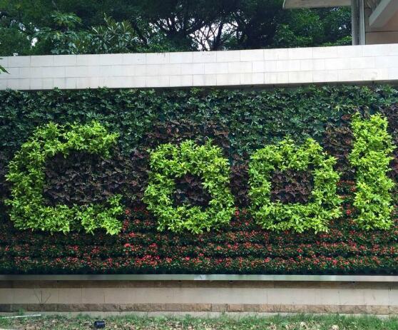 制作生态植物墙要注意的五点事项