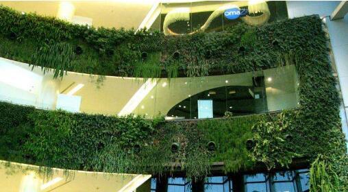 垂直绿化的类型有哪些