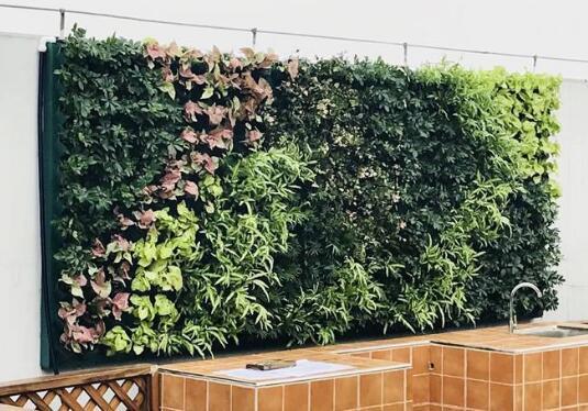 植物墙常用植物选择需考虑因素