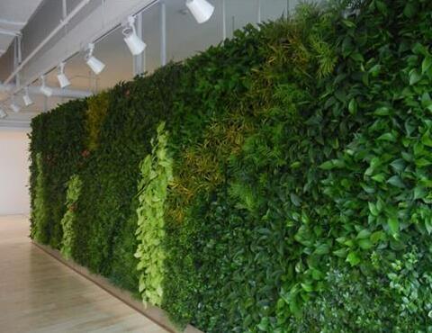 什么环境下不适合安装植物墙