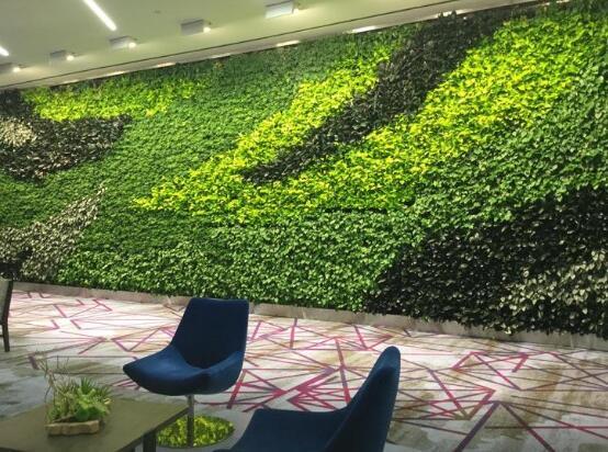 室内制作绿色垂直植物墙现在是非常流行的