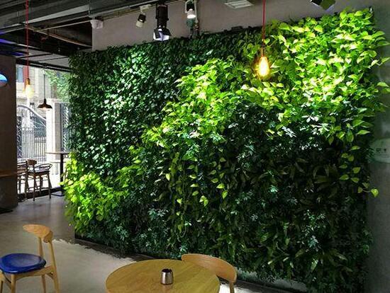 室内制作绿色垂直植物墙现在非常流行