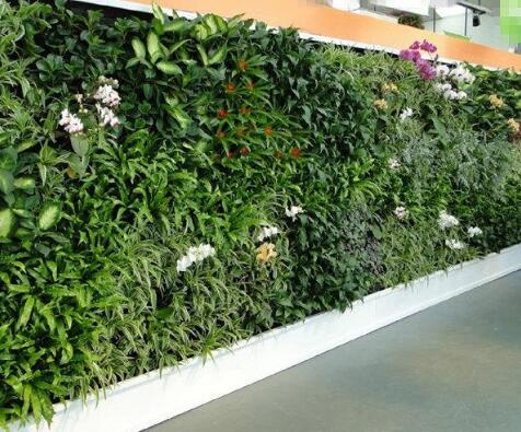 仿真植物墙的清洁护理保养方法