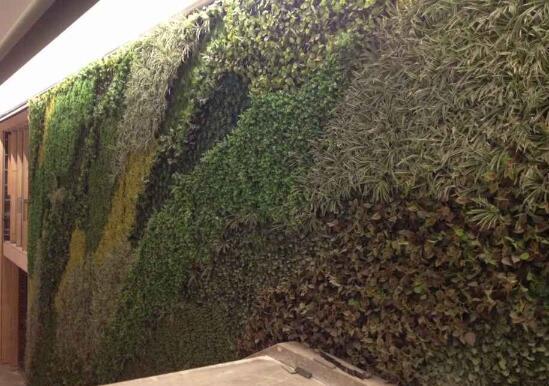 垂直绿化成功与否的因素介绍