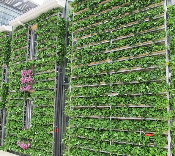 植物墙有几种造景模式