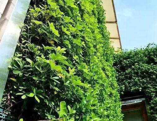 仿真植物墙的环保性如何
