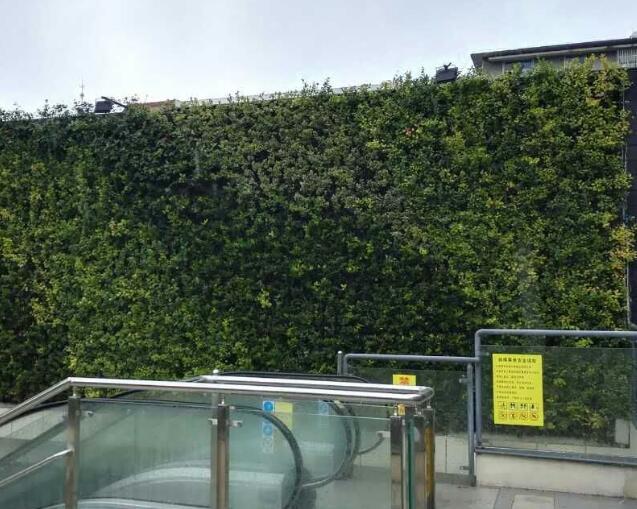 室外仿真绿植墙会不会褪色