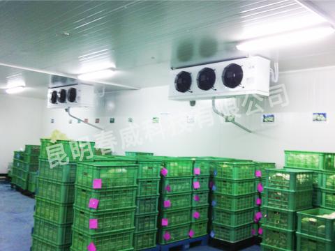 蔬菜冷库制作