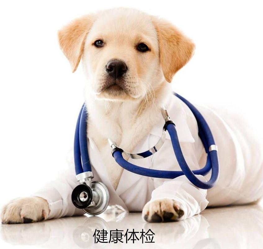 宠物疾病治疗-MS