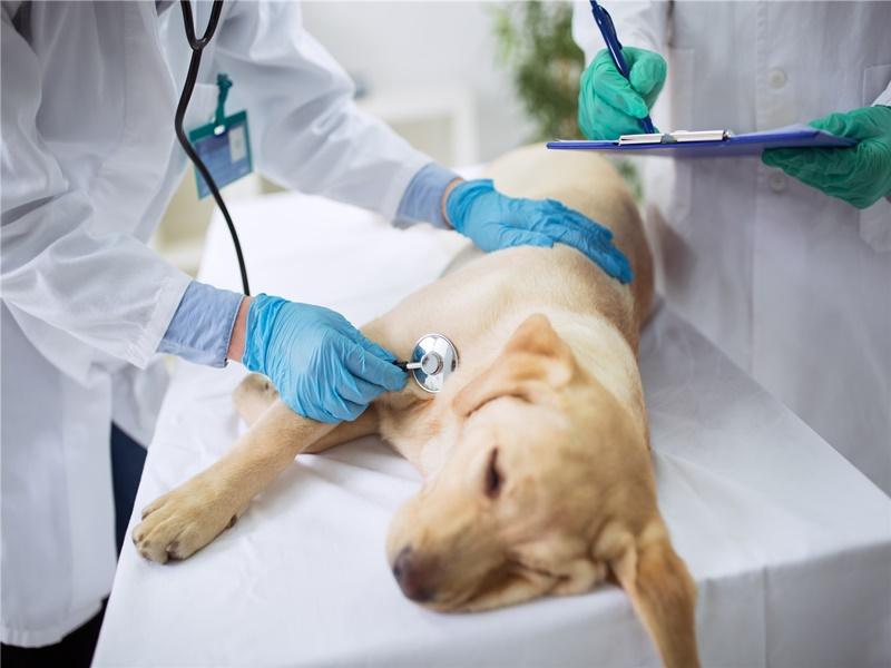 M-S 宠物诊所 D-H