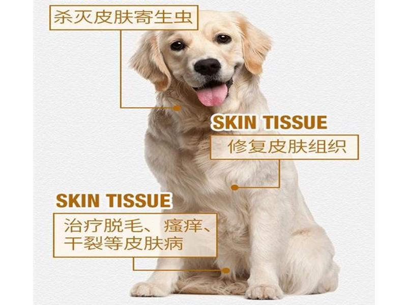 宠物寄生虫治疗
