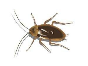 长沙昆虫防治