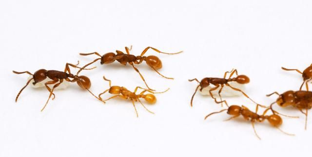 长沙灭白蚁公司