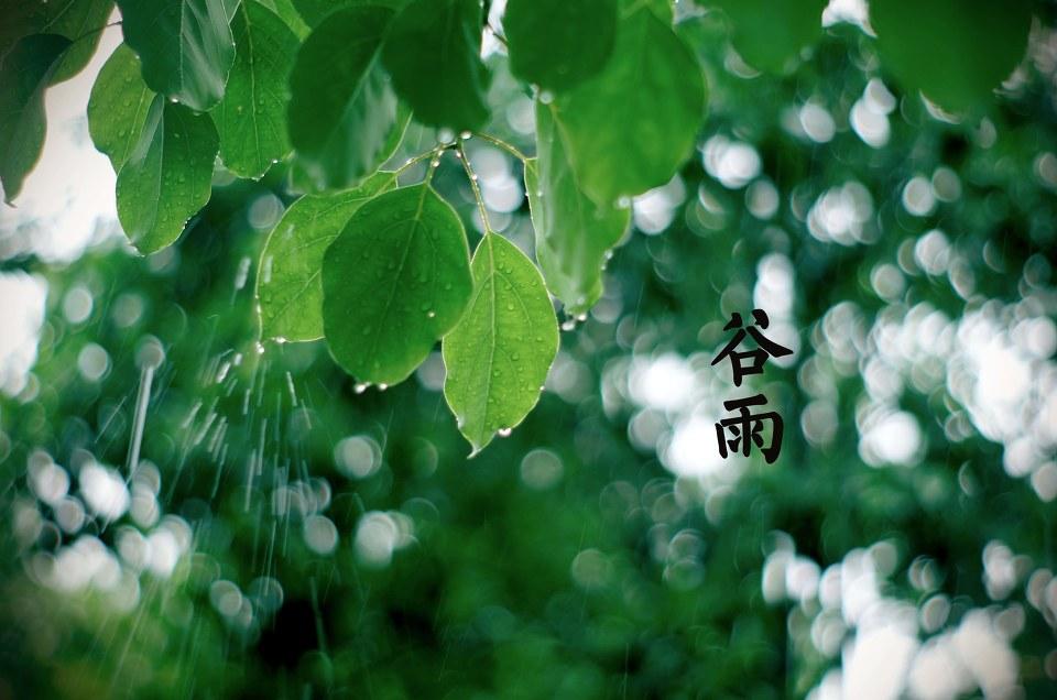 重庆防尘喷头批发之谷雨时节看牡丹