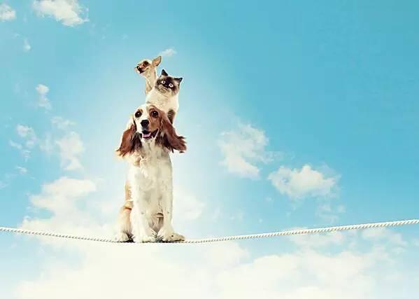 兴安盟训犬 训犬的重要性 训犬基地 大龙训犬基地