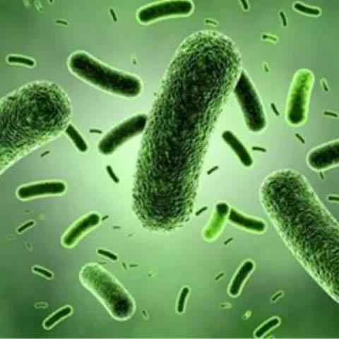 飲水機細菌