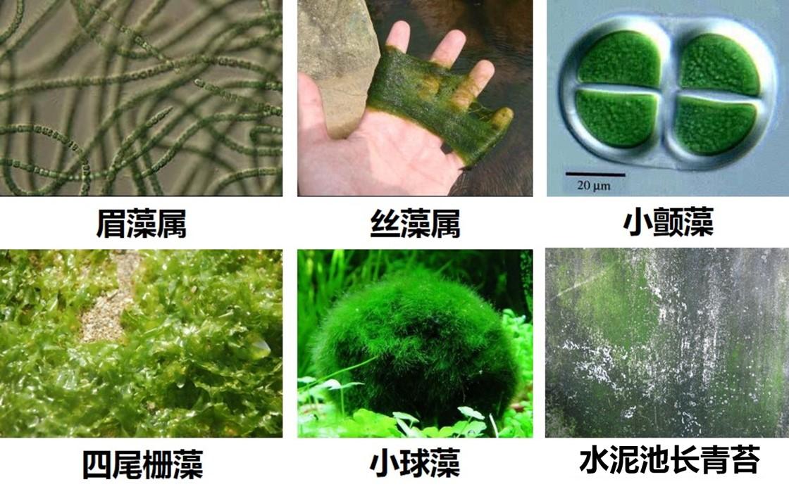 【池漆】水池漆,水泥池漆具有抗青苔,抗藻性能的重要性