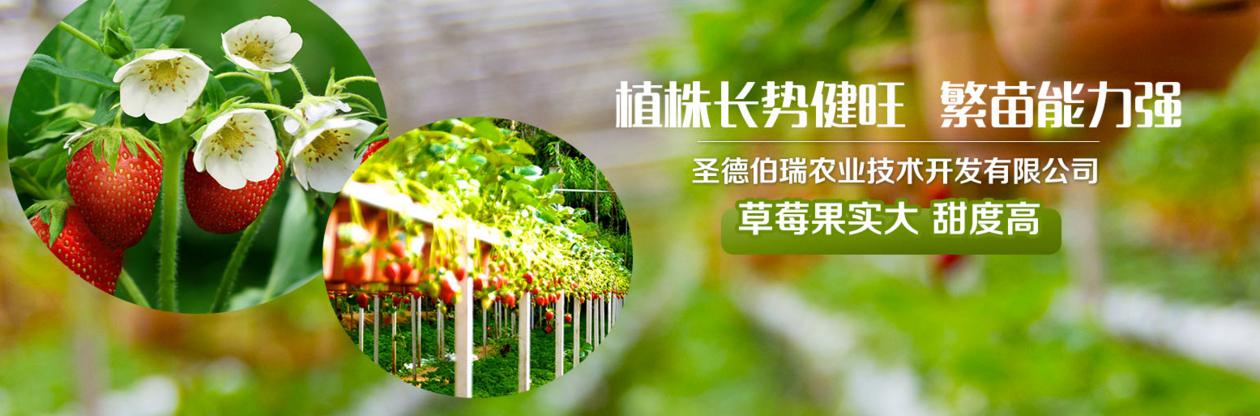 四季草莓苗签约于富海360定制网络推广方案一套