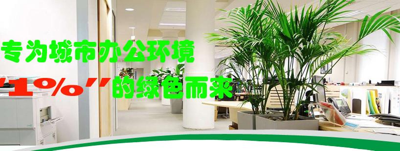 成都植物租赁公司加入富海360做网络推广