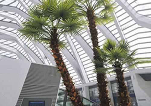 室外仿真棕榈树