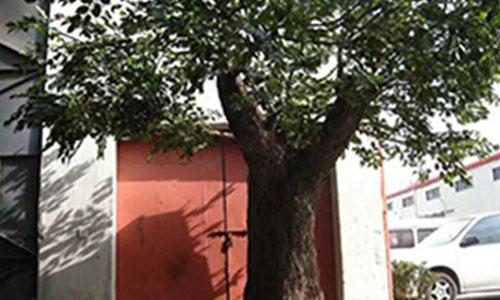 水泥仿真假树