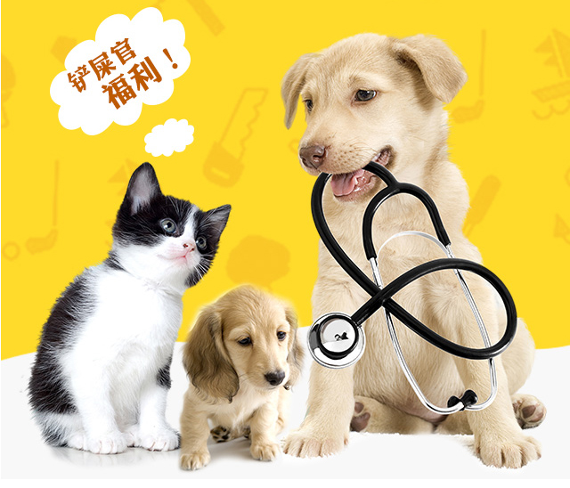 3-017宠物医院