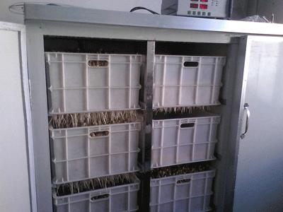 黄豆芽苗机