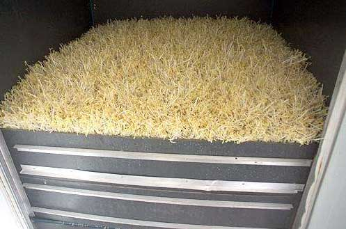 芽苗机的芽苗菜作用以及大豌豆苗的功效