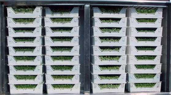 珠海豆芽机