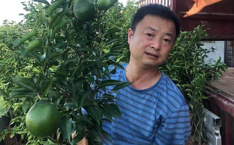 丹棱大雅柑苗打浆发往浙江大雅柑种植户