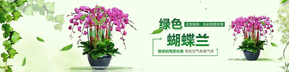贵州植物租赁