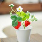 贵州植物租摆