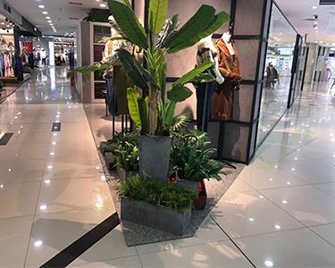 商城植物租摆