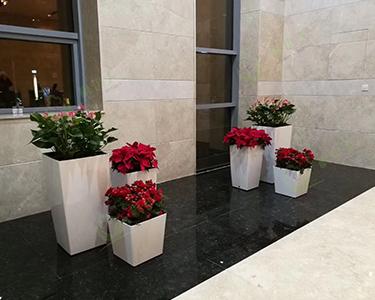 公司租摆花卉